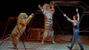 The Strange and Deadly Saga of 15 Ringling Bros. Circus Cats' Final Week in America