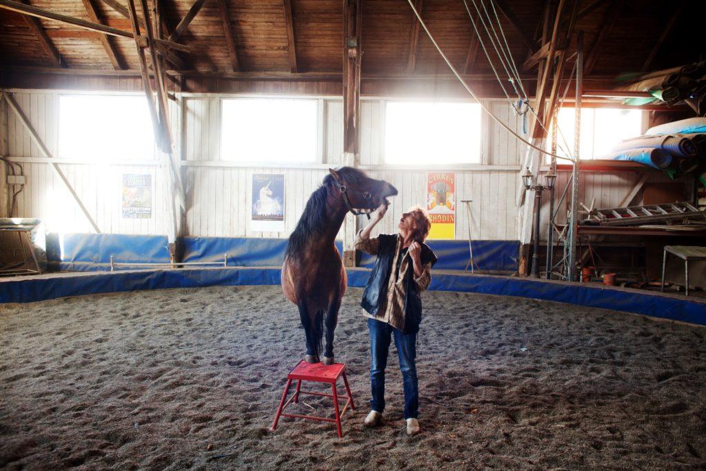 Training a circus horse