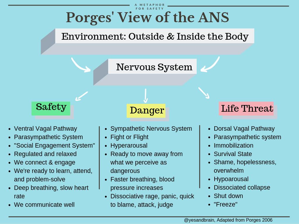 Porges' view of the autonomic nervous system