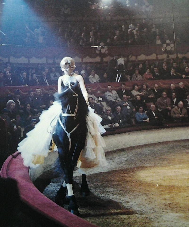 Horse riding in circus ring