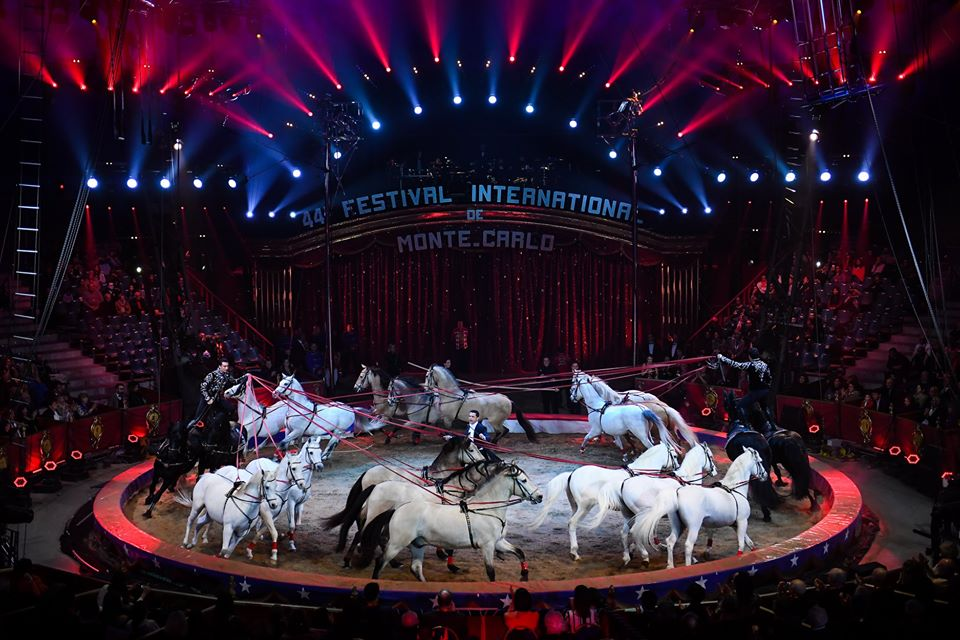 Horses in a circus ring
