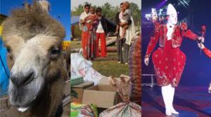 Circuses Stuck Around the World! Updated 6/10/2020