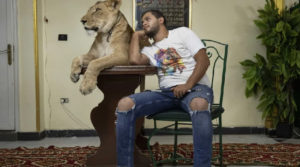 From the Circus to the Living Room: Egypt's Dynasty of Big Cat Trainers Takes the Show Home