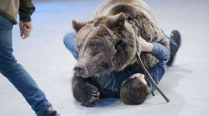 Keeper is Mauled to Death by Bear After Entering the Animal's Cage at Russian Circus
