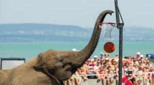 A Transport-Related Accident May Have Caused the Death of Hungarian Circus Elephants