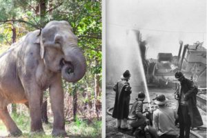 RIP SHIRLEY: Adored Survivor of 1963 Circus Ship Fire in Yarmouth Dies at Age 72