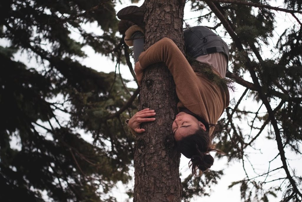 A circus clings to a tree, hugging it upside down
