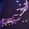 Katcher/portor flying trapeze - Circus Acts - CircusTalk