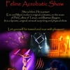 Feline Acrobatic Show - Circus Shows - CircusTalk